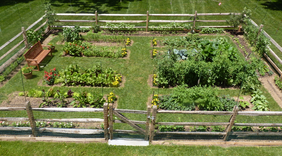 beautiful vegetable gardens