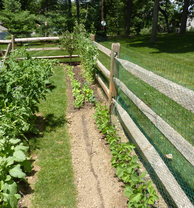 Fences fence installation vegetable gardens 4 u for Attractive vegetable garden fence